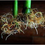 Start a Soil-free Garden