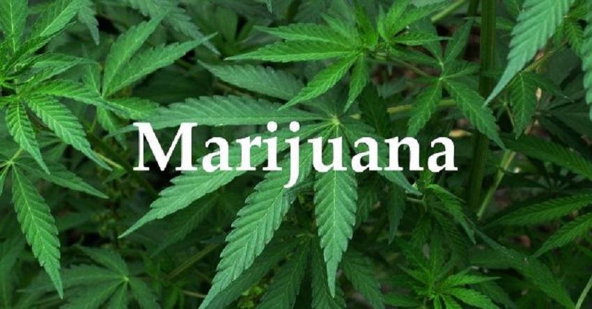 Facts About Marijuana