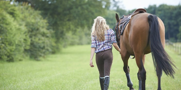 Pros And Cons Of Owning A Horse