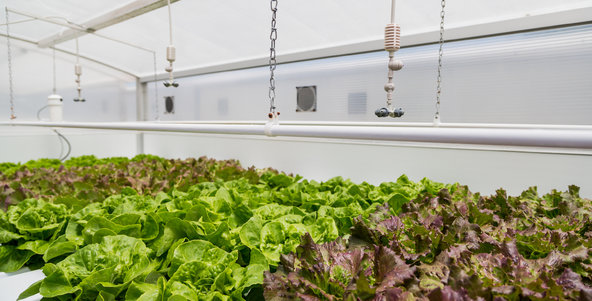 Hydroponics - A Background and Recent Developments