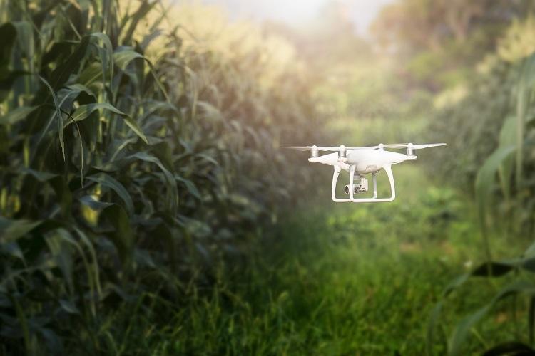 Drones To Harvest Marijuana
