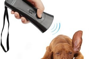 Can Barx Buddy Really Help Your Dog to Stop Barking?