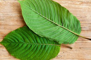 Kratom Consumption for Your Anxiety Problems