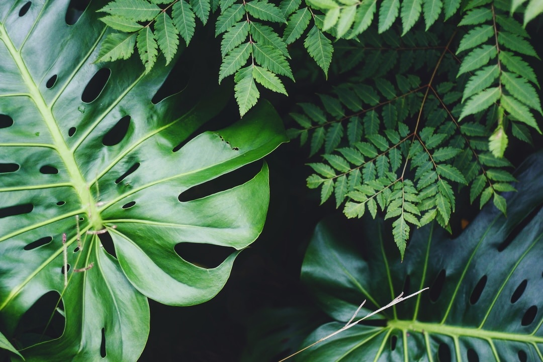 Consider indoor houseplants for a unique freshness