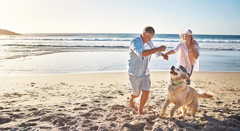 Take Your Dog On Holiday
